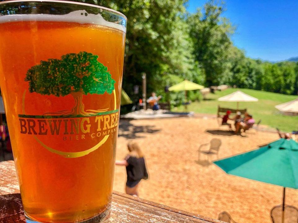 Brewing Tree Beer