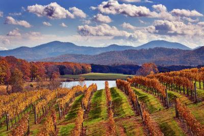 Afton Mountain Vineyards in Autumn