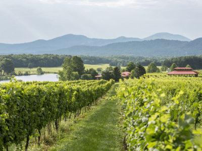 Afton Mountain Vineyards vineyards view