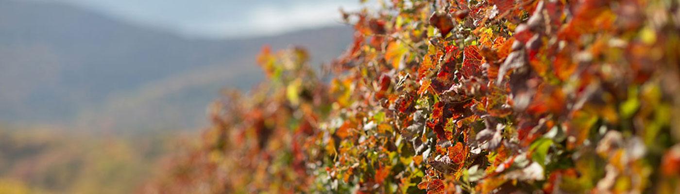 autumn at Veritas